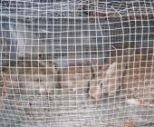 anas conigli liberati
