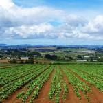 IMU AGRICOLA – COLDIRETTI SIRACUSA: ORA ESENZIONE PER AFFITTI FAMILIARI