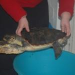 Isole Egadi: arrivate le prime dotazioni per il Centro di Primo Soccorso per tartarughe marine