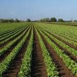 Vittoria (RG): Il Sindaco incontra il Ministro Martina delle Politiche Agricole
