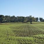 """CATANZARO: Imu terreni agricoli  Iaconantonio """"una tassa iniqua che va abolita"""""""