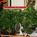 MASCALUCIA (CT):Coltiva a casa canapa indiana arrestato dai Carabinieri