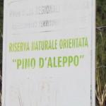 VITTORIA (RG):Riserva pino d'Aleppo