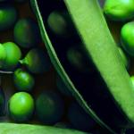 Messina: Vietata la coltivazione e la vendita di fave e piselli in alcune zone