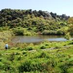 A.N.A.S. consiglia una escursione all'interno della Riserva Naturale Orientata Bosco della Ficuzza