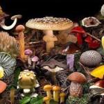 Termini Imerese: imparare a riconoscere i funghi con un corso, autorizzato,  di micologia