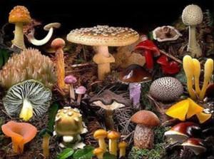 micologia funghi corso