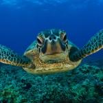 Soci ANAS tra i promotori dell'iniziativa che ha visto protagoniste le due tartarughe riprende il mare