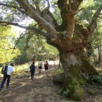 Natura: in programma una escursione al Riserva Naturale Orientata Bosco della Ficuzza, Rocca Busambra, Bosco del Cappelliere e Gorgo del Drago