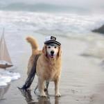 Nasce a Porto Empedocle la spiaggia dog-friendly