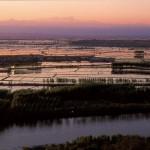 L'Unione Europea elimina i dazi per le importazioni di riso dal Vietnam: è guerra con i risicoltori italiani