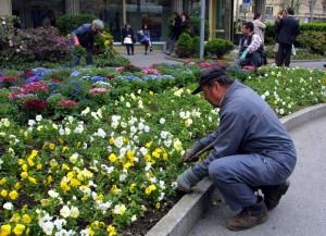 giardinieri paesaggisti giardinaggio tp