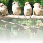 A.N.A.S. Castrovillari presenta la tredicesima mostra Ornitologica presso la Città di Castrovillari