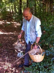 raccolta funghi (2)