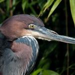 Bagheria capitale dell'ornitologia dal 2 all'8 novembre