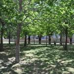 Palermo: ritorna il verde in città