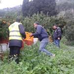 A.N.A.S. Zonale Madonie organizza per domenica prossima, tempo permettendo, gita all'aranceto di Villagrazia