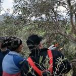 Domenica 19 giugno escursione  Riserva Naturale Orientata Bosco della Ficuzza, Rocca Busambra, Bosco del Cappelliere e Gorgo del Drago