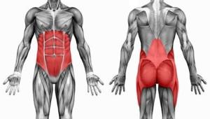 core_muscoli