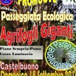 Scade il 17 settembre l'iscrizione alla passeggiata ecologica ad Agrifogli Giganti