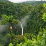 L'allarmante dato delle deforestazioni record