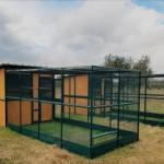 LNDC realizza un gattile dove ospitare alcuni dei gatti salvati dalle zone terremotate in attesa di adozione