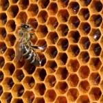 Aethina tumida – le istituzioni e gli apicoltori a confronto, 7 marzo 2017 presso la Sala Consiliare del Comune di Zafferana Etnea, l'inizio dei lavori è previsto alle 9.15