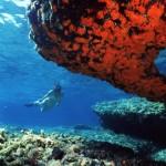 Subacquea sostenibile: l'Area marina protetta delle Egadi presente all'EuDi Show a Bologna