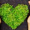sviluppo-ambientale